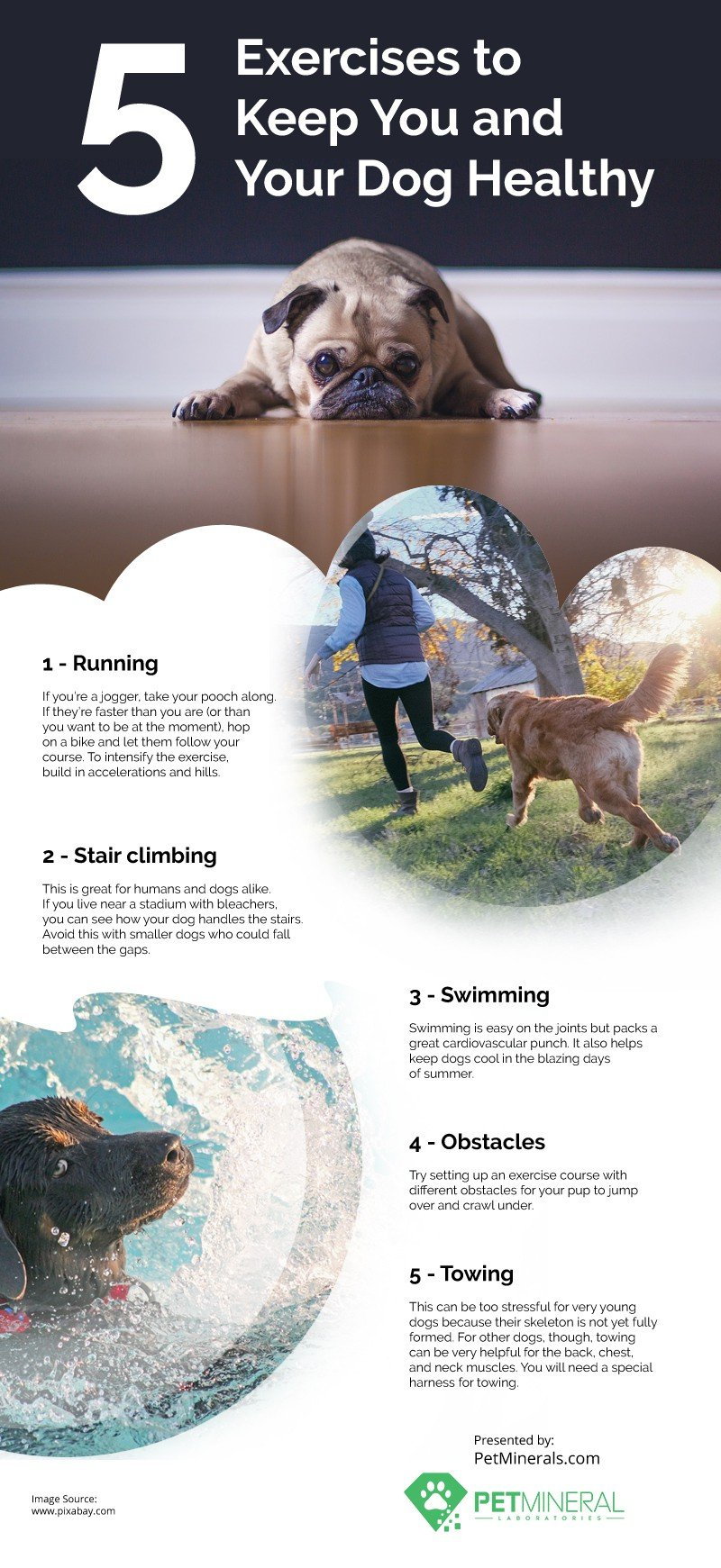 5 Exercises to Keep You and Your Dog Healthy [infographic]