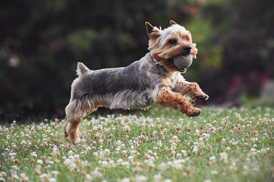 Dog Getting Enough Exercise