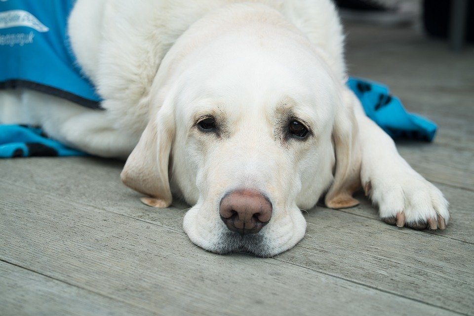 What To Do If Your Dog Fractures A Bone