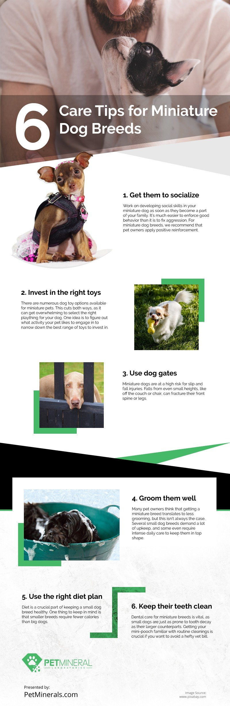 6 Care Tips for Miniature Dog Breeds [infographic]