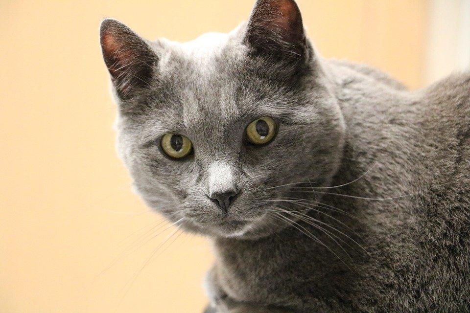 How to Care for Senior Cats